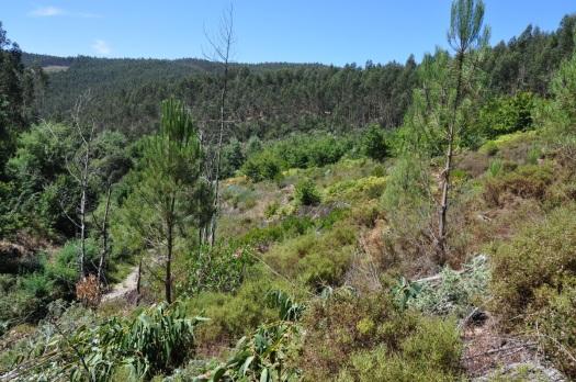 A jusante, a mancha de carvalhal do Cambedo