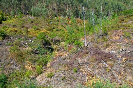 O vale nº 6 evidenciando já os trabalhos recentemente aí realizados