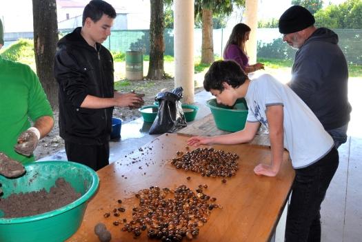 Fabrico de bolas de sementes, em Dezembro de 2014, em Arouca, pelo Movimento Terra Queimada