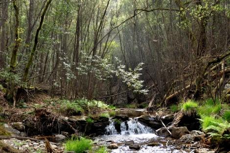 """Pequena represa. Em segundo plano, """"bosque"""" de mimosas"""