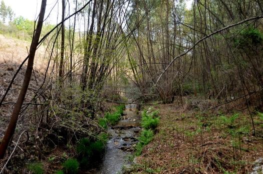 Na margem sul, uma antiga parcela agrícola; na margem norte eucaliptal recentemente cortado. Abril