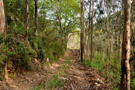 """Aqui áreas de carvalhal e eucaliptal """"encontravam-se"""". Abril."""