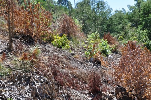 As aplicações de herbicida nunca são inócuas para as espécies não alvo, mas todos os esforços são aplicados para minimizar os danos. Agosto