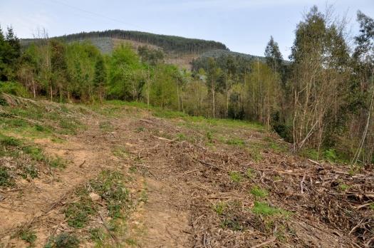 Passada/futura área agrícola. Em 2ª plano, áreas de carvalhal