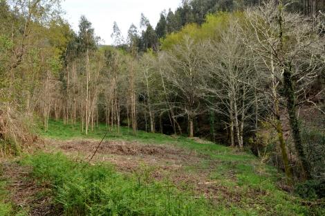 Margem do ribeiro, onde as folhosas presentes serão preservadas. Abril