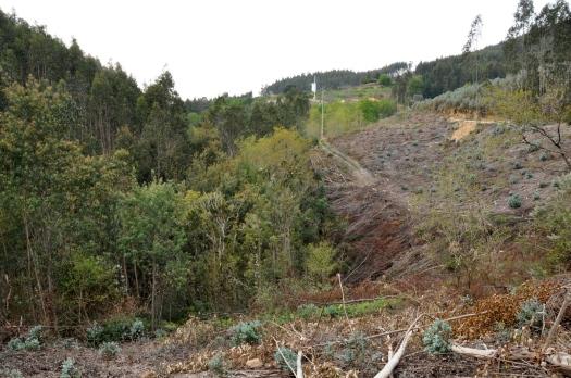 Vista para jusante, a partir do Vale de Salgueiro. Abril