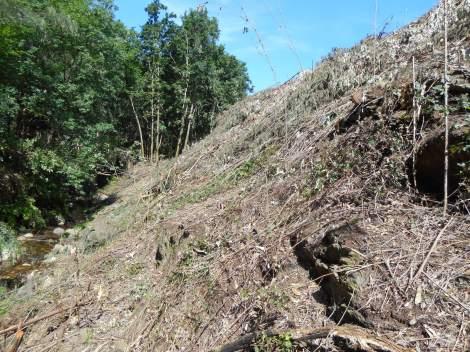 A montante da mancha de carvalhal, logo a seguir ao corte do eucaliptal. Maio