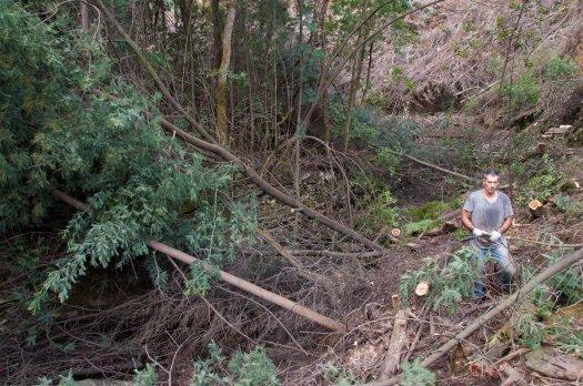 Na margem do ribeiro, já todas as mimosas foram cortadas, na margem norte, tudo na mesma por agora