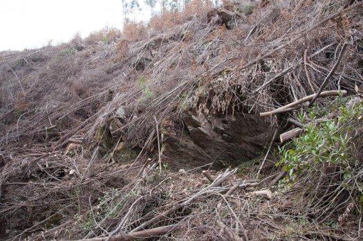 Um pouco mais para jusante a desobstrução da levada permitia constatar uma paisagem desoladora