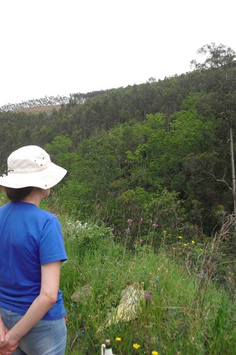 a olhar a mancha de carvalhal que sobreviveu ao incêndio de 2005